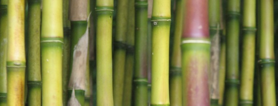 <B>British Bamboo Society Conference</B>