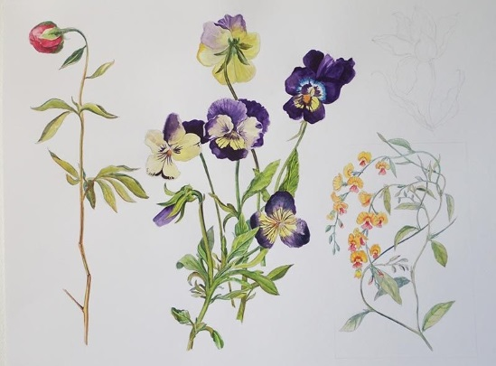<B><I>Wild Botanical Drawing</I></B>